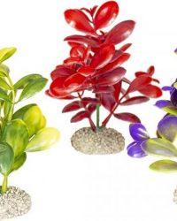 Auqa Della Plant crassula Gemengde kleuren M - height 16cm, PER STUK !! GEEN KEUZE MOGELIJK !