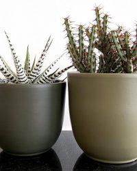 Cactus en vetplant mix in sierpot Greentree 2 stuks