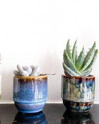 Cactus en vetplant mix met pot (5,5cm) Retro Shine