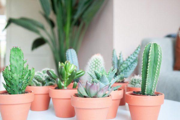 Cactus en vetplanten mix (5,5 cm) Terracotta 5 stuks