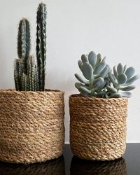 Cactus en vetplanten mix Basket in the mix natural 2 stuks