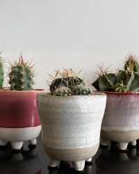Cactus en vetplanten mix in sierpot 5,5cm Colorful glazy 5 stuks