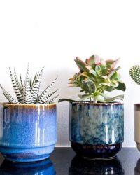 Cactus en vetplanten mix in sierpot 8,5cm Retro Shine