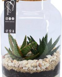 Hellogreen - Do It Your Own Terrarium - Aloë in Glas - Plant Ecosysteem
