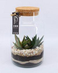 Kamerplant van Botanicly - Aloe Vera in DIY Terrarium 'Typ 1' als set - Hoogte: 30 cm