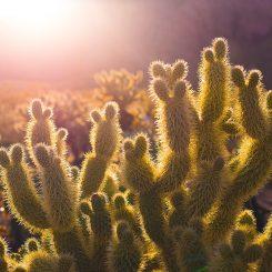 Hoeveel licht heeft een vetplant nodig?