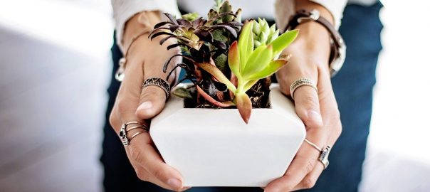 vetplant voor in huis