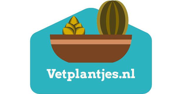 Vetplantjes.nl