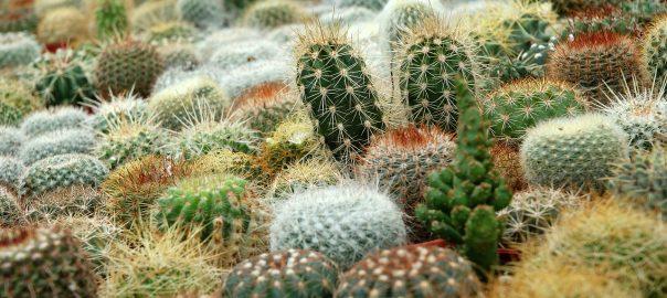 vetplantjes mix groothandel