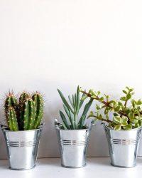 Cactus en vetplanten mix in classy bucket 6cm 5 stuks