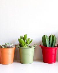 Cactus en vetplanten mix in happy bucket 6cm 5 stuks