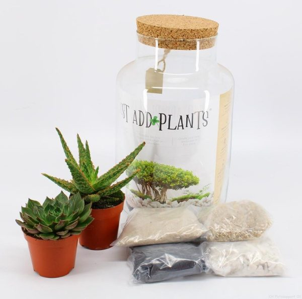 Aloë in glas - DIY Planten Terrarium