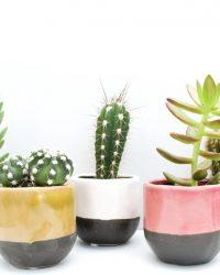 Cactus en vetplanten mix in sierpot Color dip
