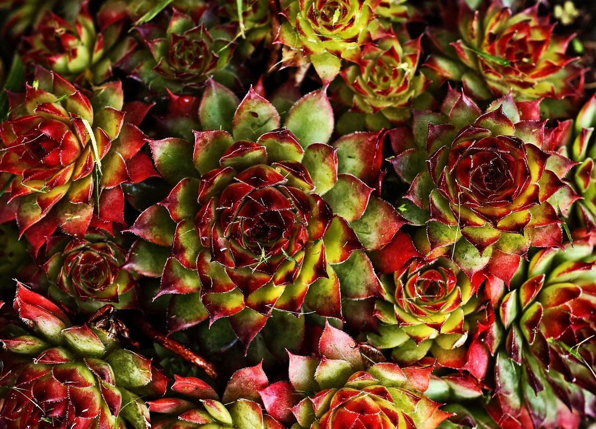vetplant kleurt rood
