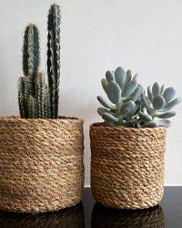 Cactus en vetplanten mix Basket in the mix natural 2 stuks