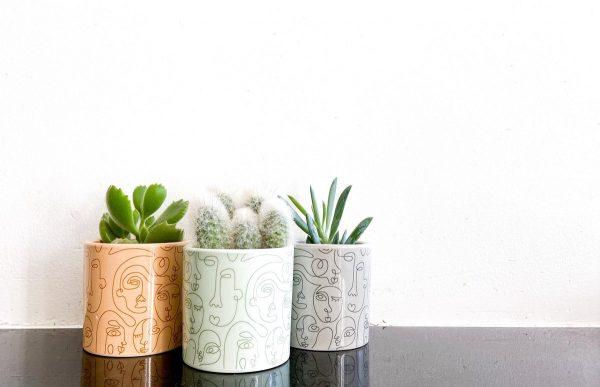 Cactus en vetplanten mix happy face 3 stuks 6,5cm pot