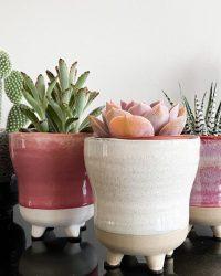 Cactus en vetplanten mix in 8,5cm sierpot Colorful Glazy 5stuks