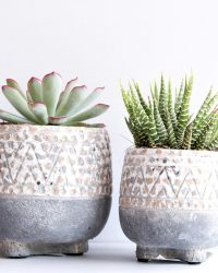 Cactus en vetplanten mix in sierpot Sandy duo