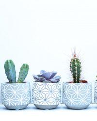 Cactus en vetplanten mix met pot (5,5 cm) Concrete 5 stuks