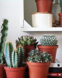 Cactus interieur complete deal 10,5cm cactus en vetplant mix