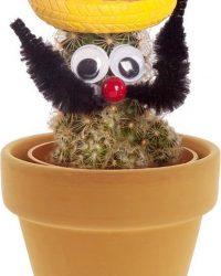 Desertworld Geschenkbox - Mexicaan Cactussen + terracotta potjes - 12 stuks - Ø 6 cm - Hoogte️ 12-15 cm