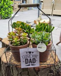 Kamerplanten van Hee Dat Is Het | Dad Giftbox - Easy Care | Vaderdag kado cadeau | Crassula