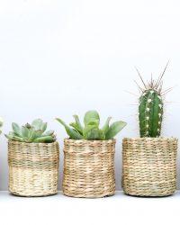 cactus en vetplanten mix in siermand Malibu beach