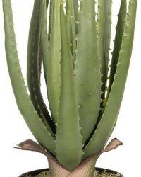 Decoratie kamerplant aloe vera 14*14*46 cm Groen | 6PL0214 | Clayre & Eef