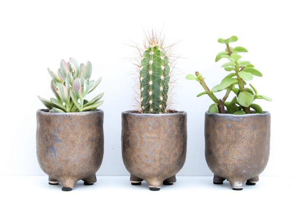 Cactus en vetplanten mix Ø5,5cm in sierpot Brons 3 stuks