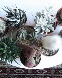 Cactus interieur complete deal pot Ø8,5cm 7 stuks cactus en vetplant mix
