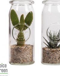 Choice of Green - Message in a bottle -Cactus Hawortia/Opuntia- set van 2 stuks - Kamerplant in glas - Hoogte ↕30 cm