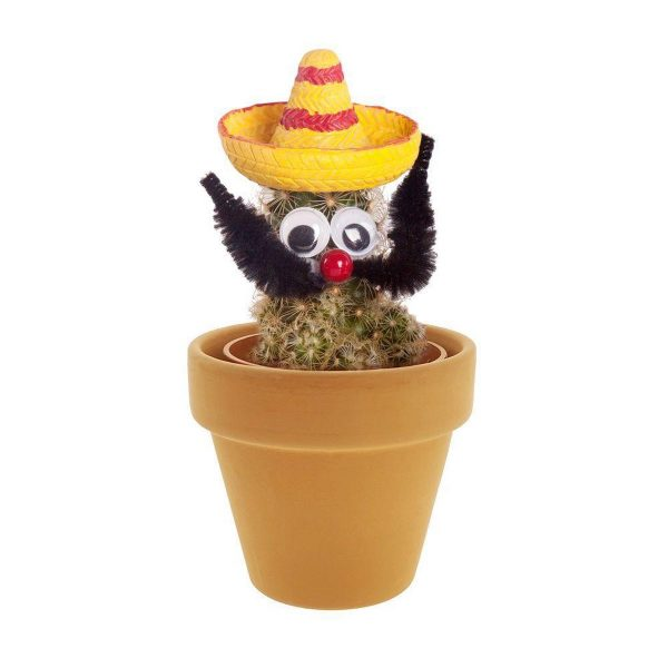 Desertworld Geschenkbox - Mexicaan Cactussen + terracotta potjes - 12 stuks - Ø 6 cm - Hoogte 12-15 cm