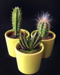 Set van 3 verschillende cactus plantjes met overpot, Leuk cadeau!