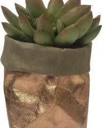 de Zaktus - Sedum Adolphii - succulent - paper bag rose goud - maat M