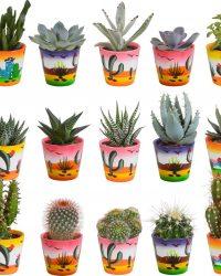 Cactus en vetplanten mix in Mexicaanse pot | 15 stuks | Ø 6 cm | ↕ 8-13 cm