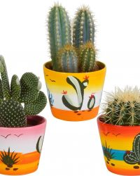 Cactus mix in Mexicaanse pot | 3 stuks | Ø 12 cm | ↕ 17-23 cm
