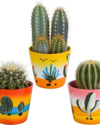 Cactus mix in Mexicaanse pot | 3 stuks | Ø 9,5 cm | ↕ 13-18 cm