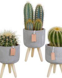 Cactus mix in betonpot op 3 pootjes | 3 stuks | Ø 10,5 cm | ↕ 16-21 cm