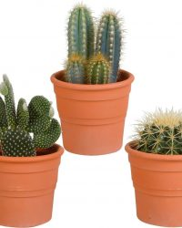 Cactus mix in terracotta pot | 3 stuks | Ø 13 cm | ↕ 17-23 cm