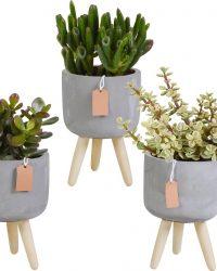 Crassula mix in betonpot op 3 pootjes   3 stuks   Ø 10,5 cm   ↕ 16-21 cm