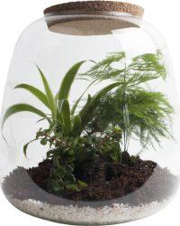 Ecosysteem met verlichting - Plant in glas - Ecoworld Tropical Biosphere - Ecosysteem in Glas met LED-verlichting - Met 3 leuke Planten (Asparagus, Sedum, Chlorophytum) - Ø 23.5 cm - Hoogte 25 cm   Kamerplant