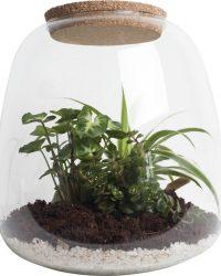 Ecosysteem met verlichting - Plant in glas - Ecoworld Tropical Biosphere - Ecosysteem in Glas met LED-verlichting - Met 3 leuke Planten (Syngonium, Sedum, Chlorophytum) - Ø 23.5 cm - Hoogte 25 cm   Kamerplant