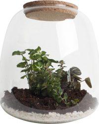 Ecosysteem met verlichting - Plant in glas - Ecoworld Tropical Biosphere - Ecosysteem in Glas met LED-verlichting - Met 3 leuke Planten (Syngonium, Sedum, Peperomia) - Ø 23.5 cm - Hoogte 25 cm   Kamerplant