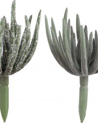 J-Line Vetplant Echeveria Plant Groen Medium Assortiment Van 2