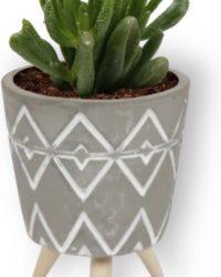 Kamerplant Crassula Horn Tree - Jadeplant - ± 12cm hoog - ⌀ 7cm - in grijzen pot op houten voet