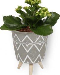 Kamerplant Kalanchoë Perfecta - met gele bloemen - ± 10cm hoog - 7cm diameter - in grijze pot op houten voet