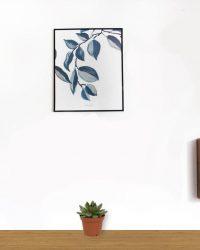 Set van 4 Vetplanten - Echeveria Agevoides - ± 12cm hoog - 7cm diameter