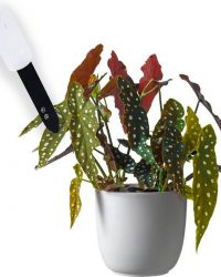 Vochtmeter voor planten binnen | Digitale vochtmeter inclusief batterij | Vochtigheidsmeter voor potgrond