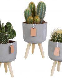 Cactus mix in betonpot op 3 pootjes | 3 stuks | Ø 12 cm | ↕ 20-26 cm