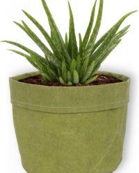 Aloe Vera Kamerplant - ± 30cm hoog - 12cm diameter - in groene sierzak